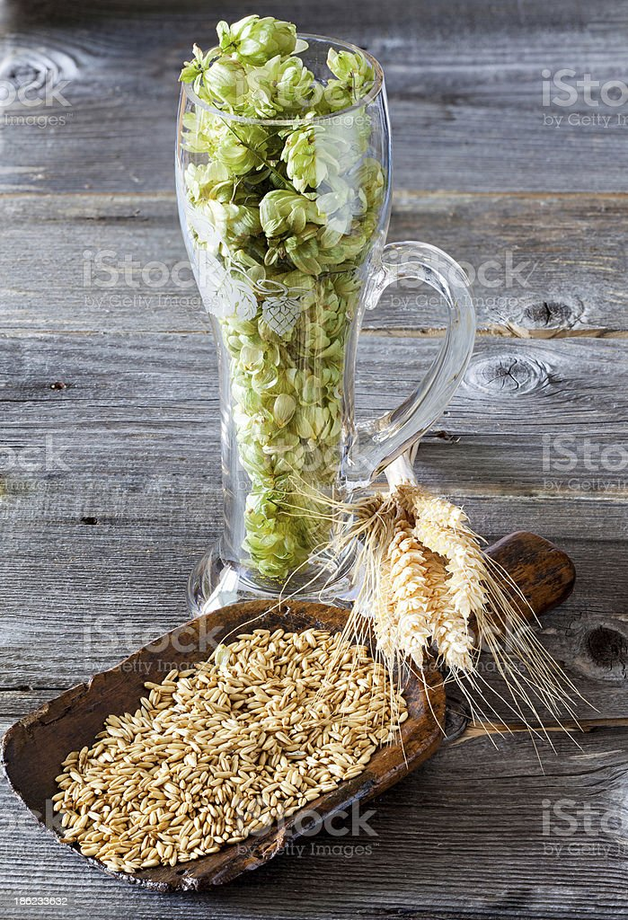 Hops, grain and cereal ears royalty-free stock photo