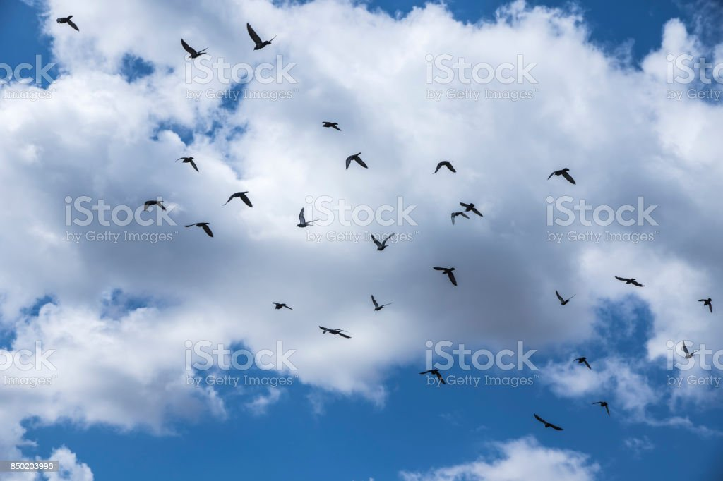 Horizon of birds stock photo