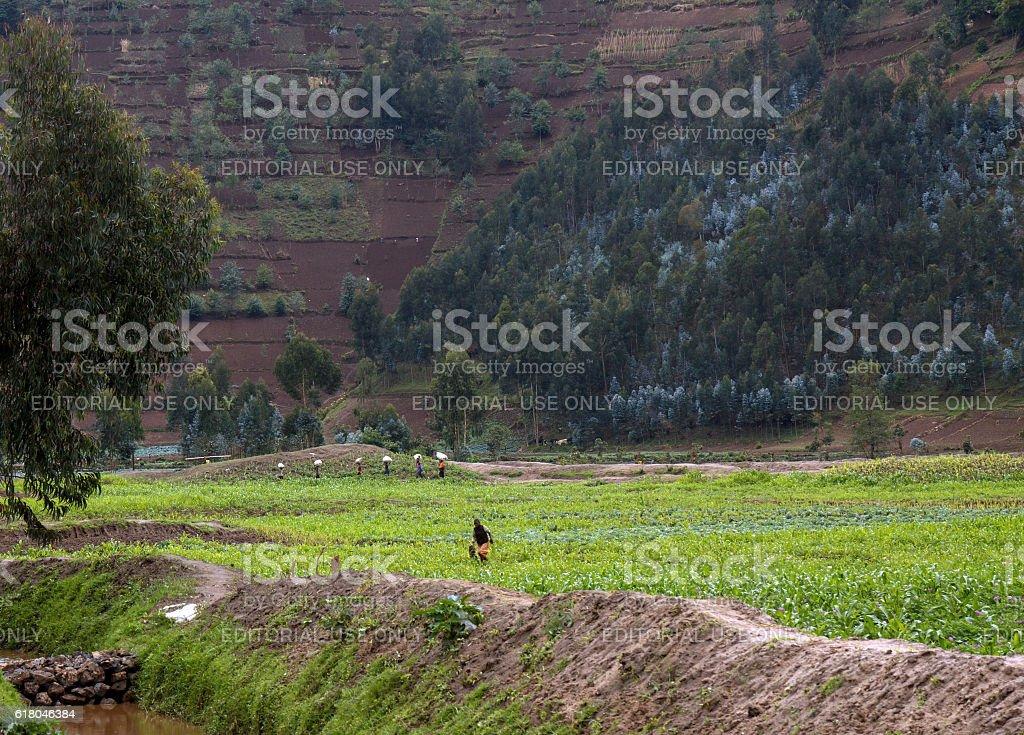 Horizontal and almost vertical farming in Rwanda stock photo