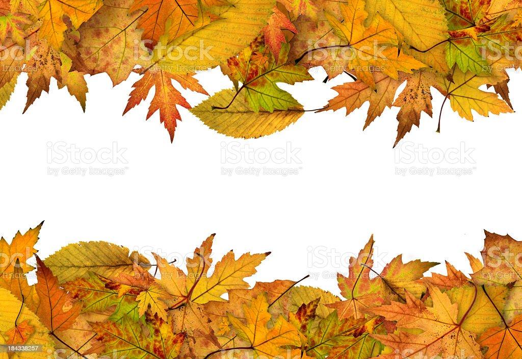 Horizontal Autumn leaf borders over white background royalty-free stock photo