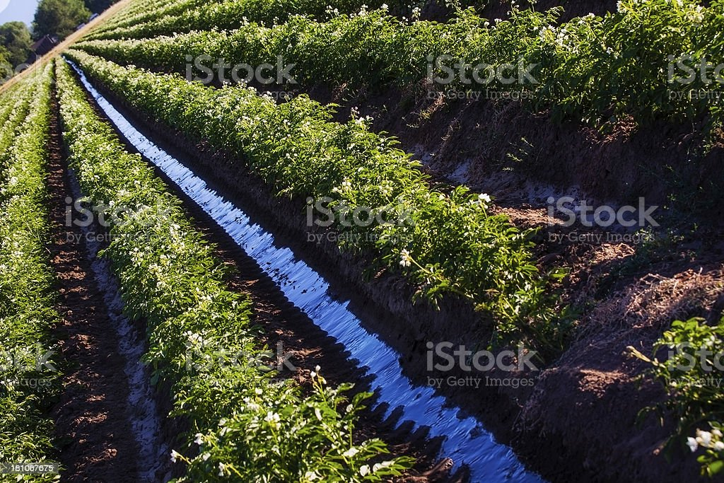 Horizontal Dynamic Angle Irrigating on Water Day royalty-free stock photo