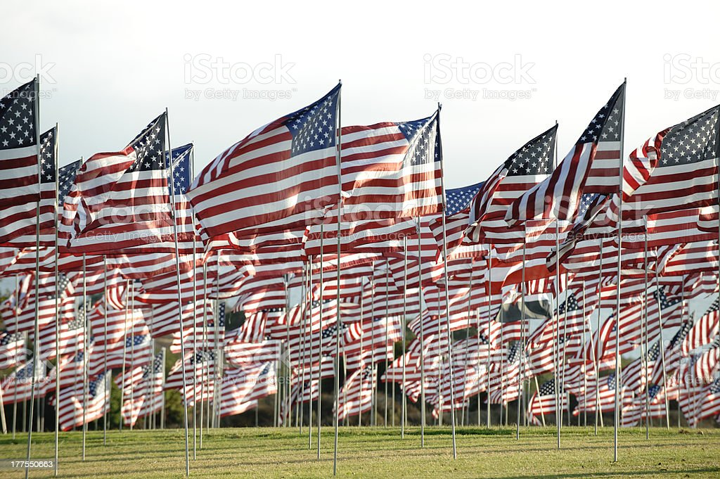 horizontal field of american flags royalty-free stock photo