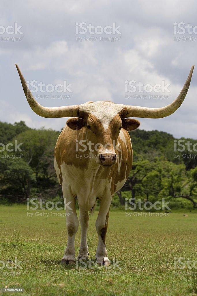 Horizontal Horns stock photo