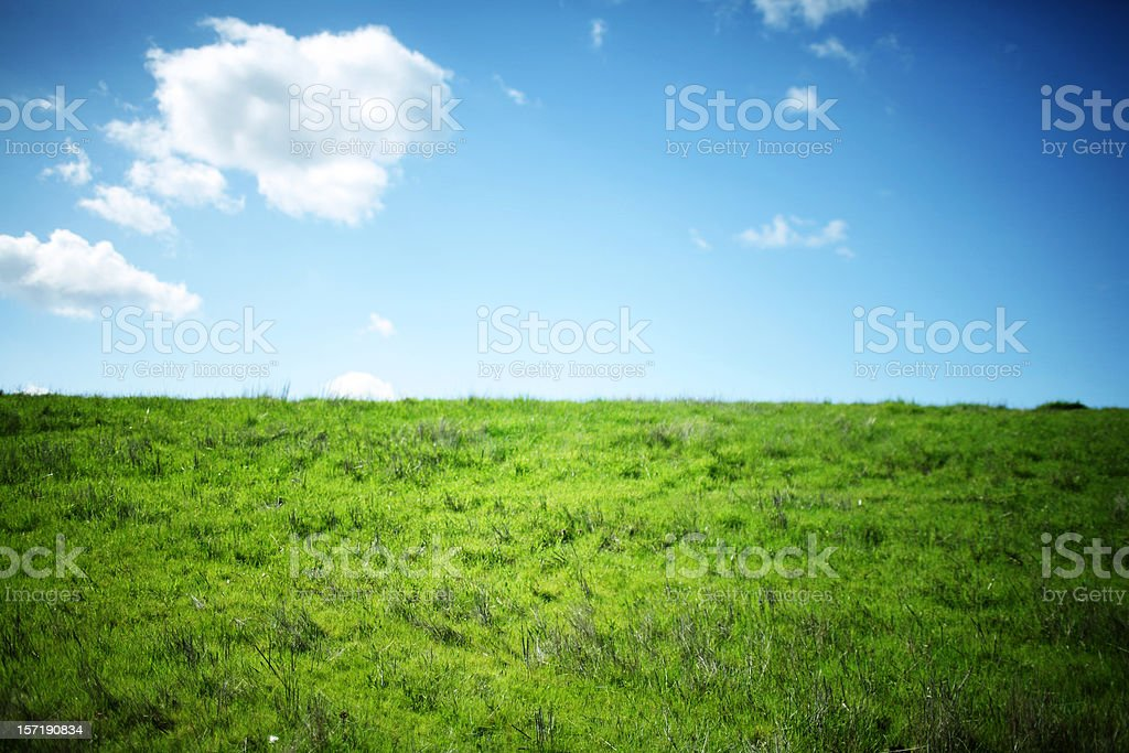 Horizontal Lush Green Grass and Summer Clouds Against Blue Skies royalty-free stock photo