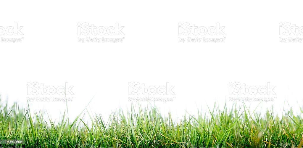 Horizontal photo of green grass and light blue sky stock photo