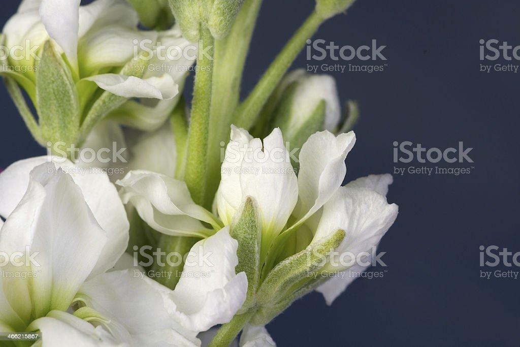 Horizontal section of white stock bouquet. stock photo