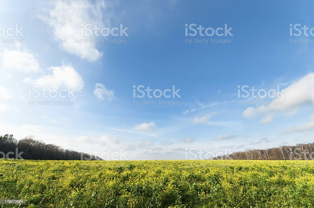 Horizontal Wide angle blue sky with flower meadow stock photo