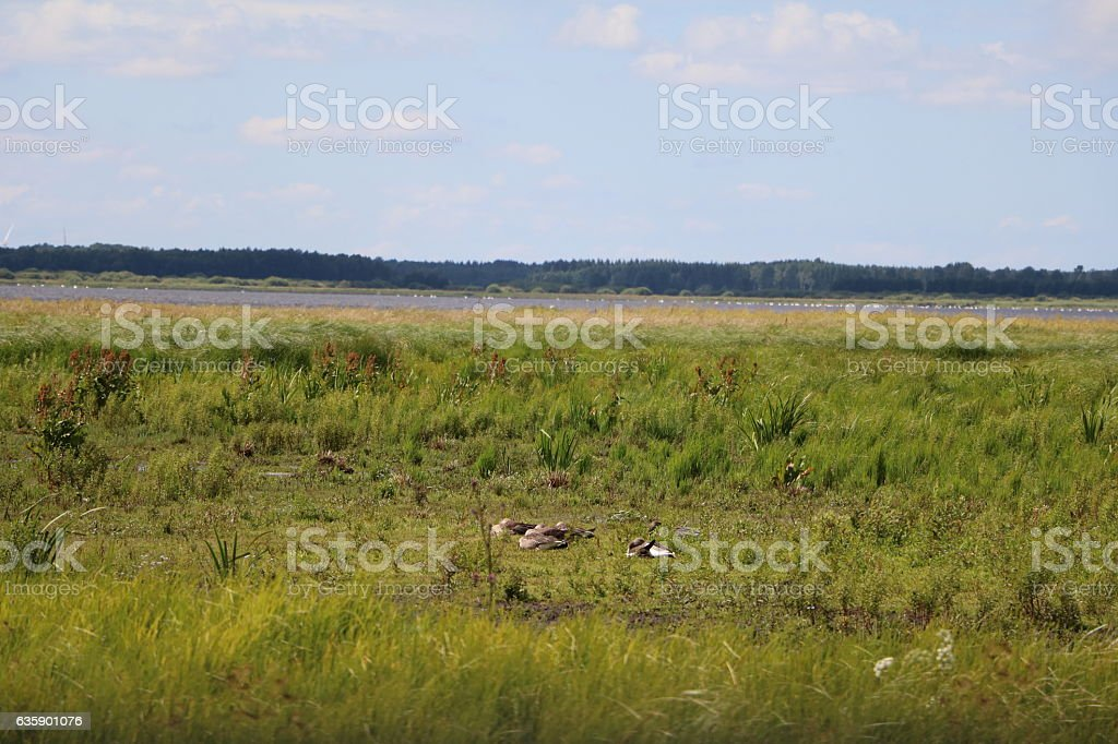 Hornborgasjöns natur reservat in summer in Sweden, Scandinavia stock photo