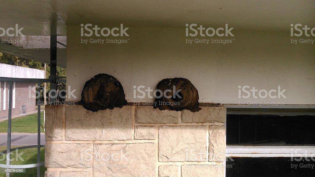 horneros foto de stock libre de derechos