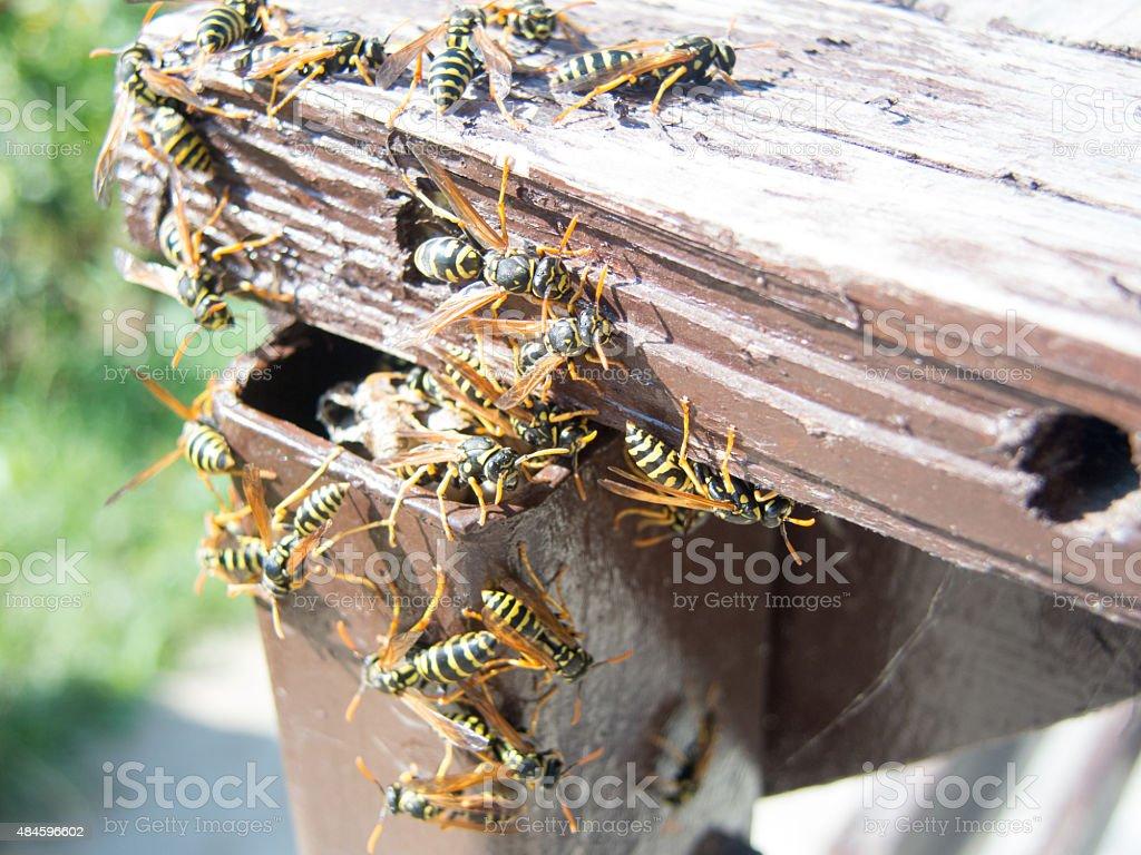 hornet nest and hornets stock photo