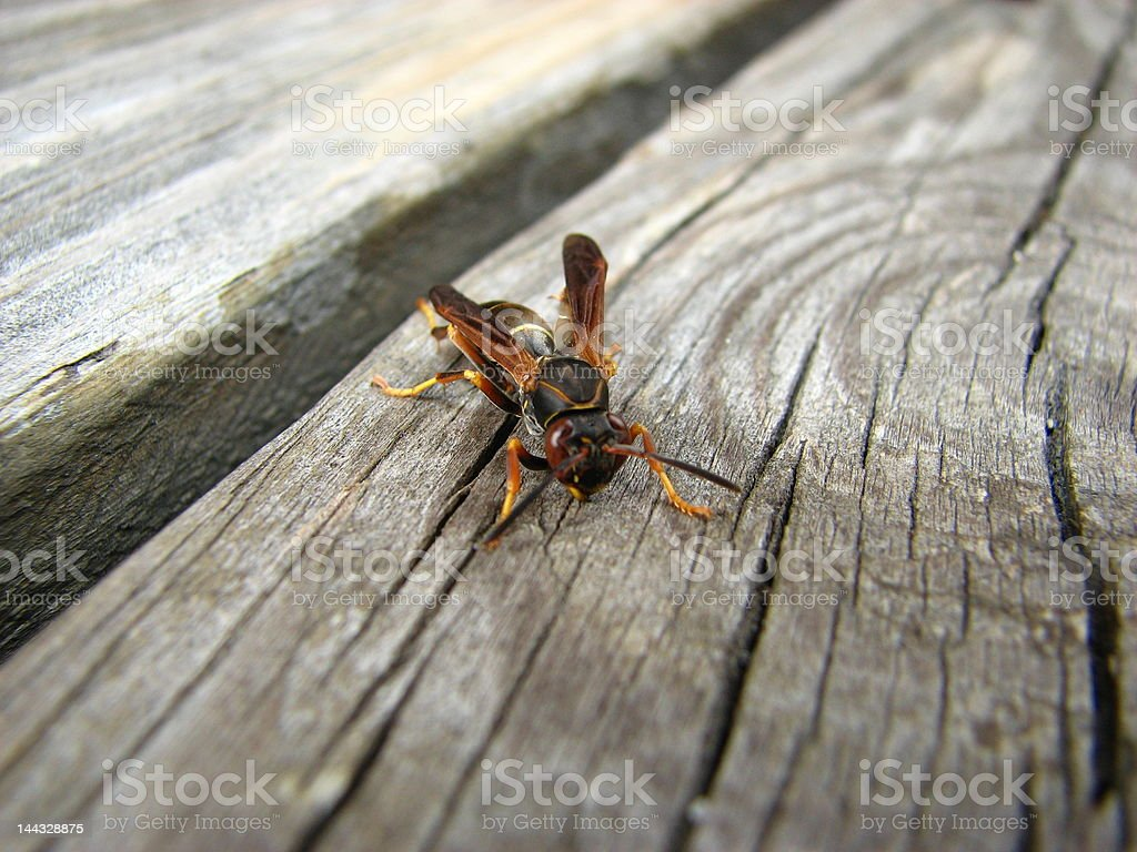 Hornet on the deck royalty-free stock photo