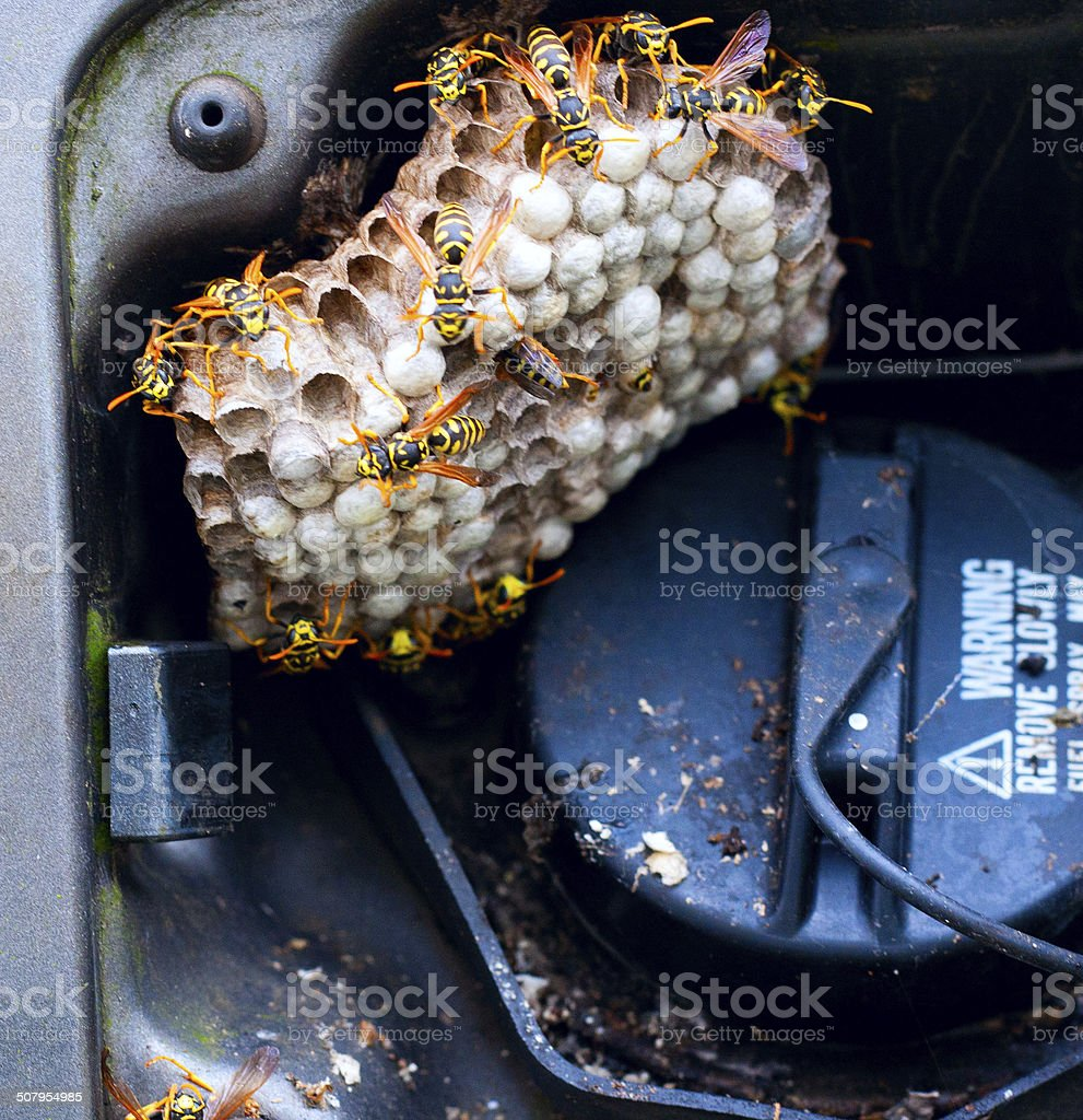 Hornets Under a Gas Cap Cover stock photo