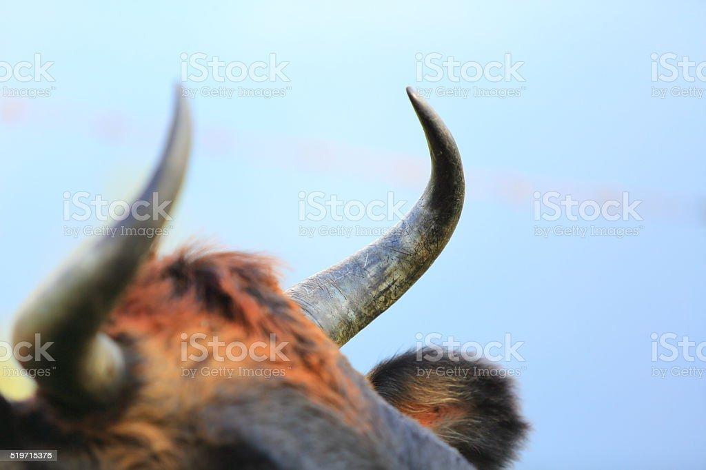 Horns Close-up stock photo