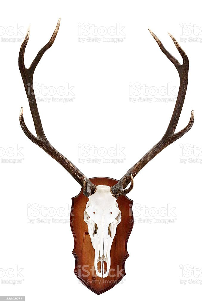 horns of a dee royalty-free stock photo