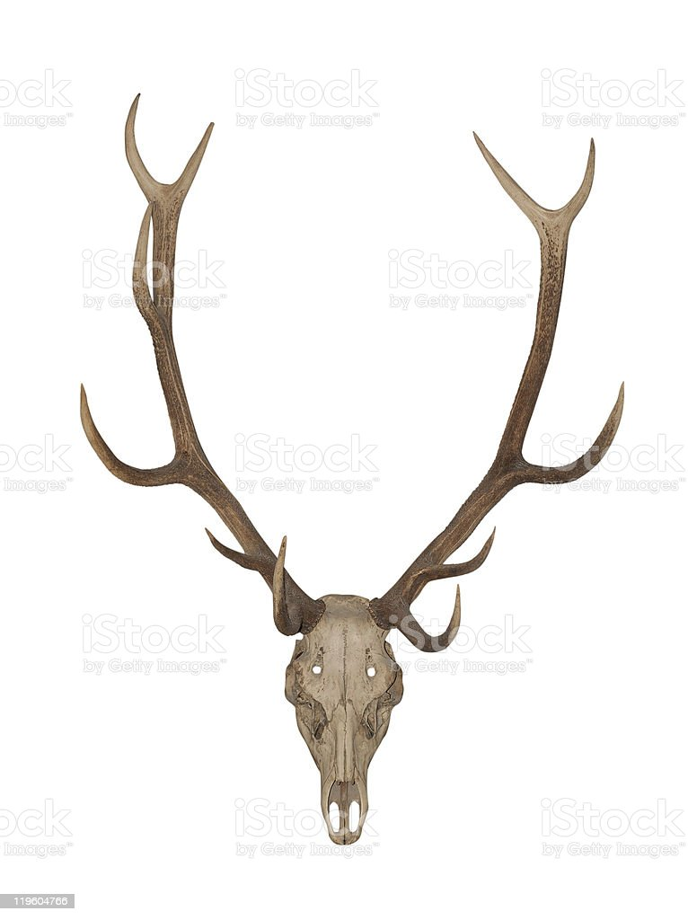Horns of an animal royalty-free stock photo