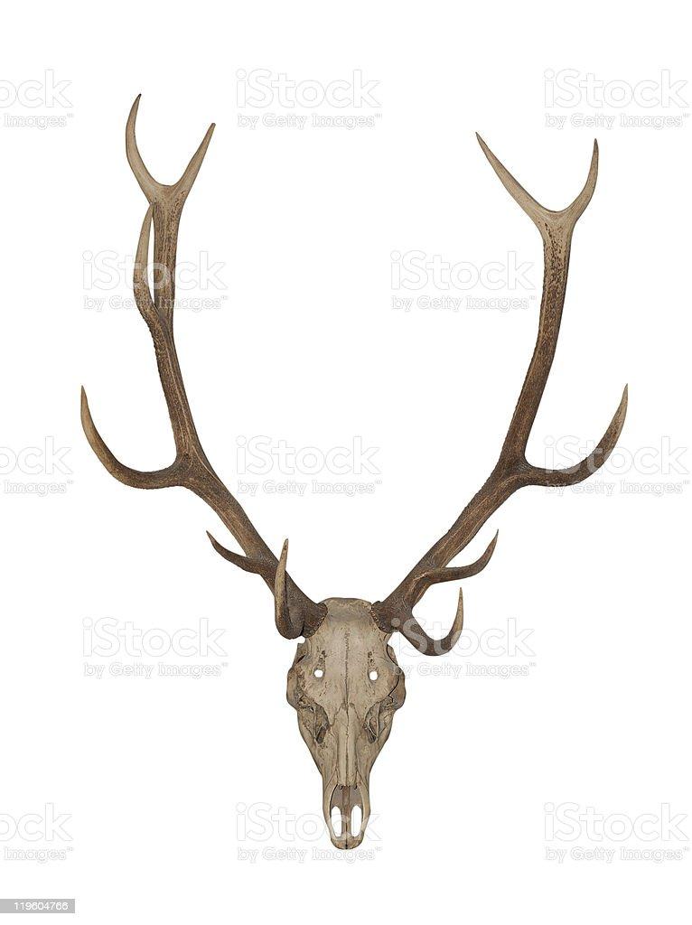 Horns of an animal stock photo