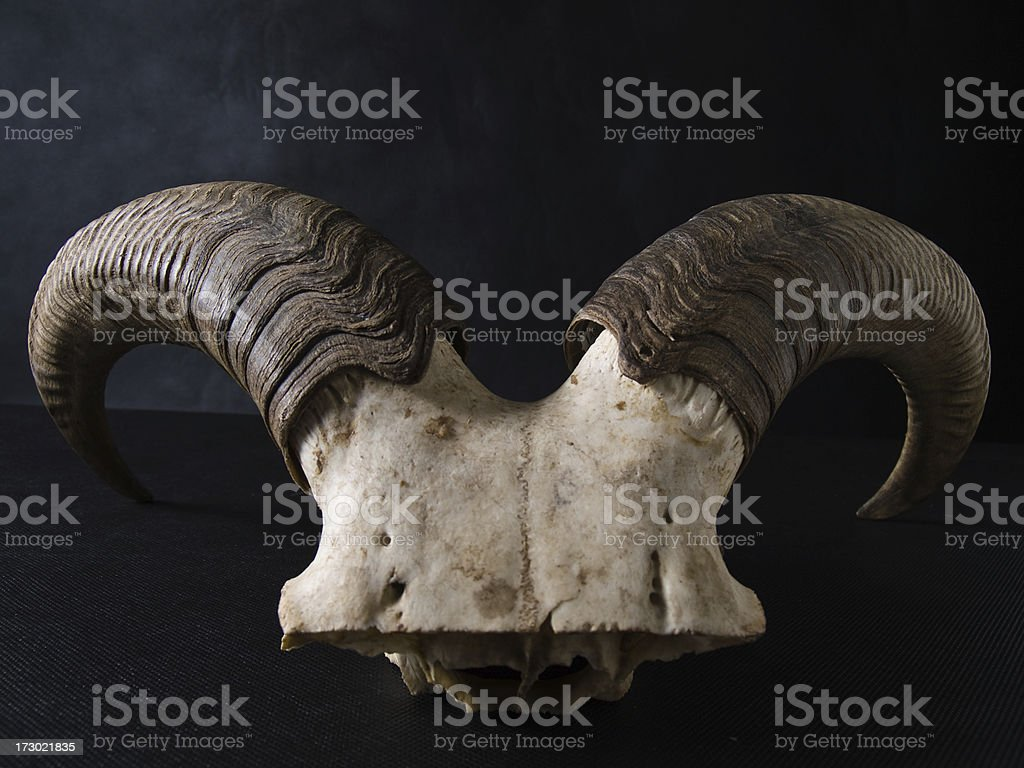 horns royalty-free stock photo