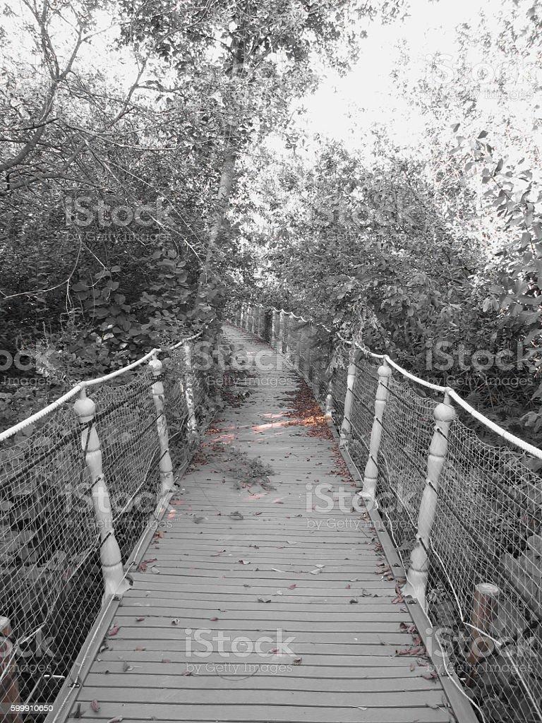 Horror bridge. Image of old wooden bridge stock photo