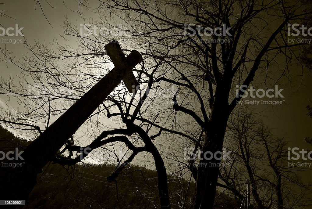 Horror forest royalty-free stock photo