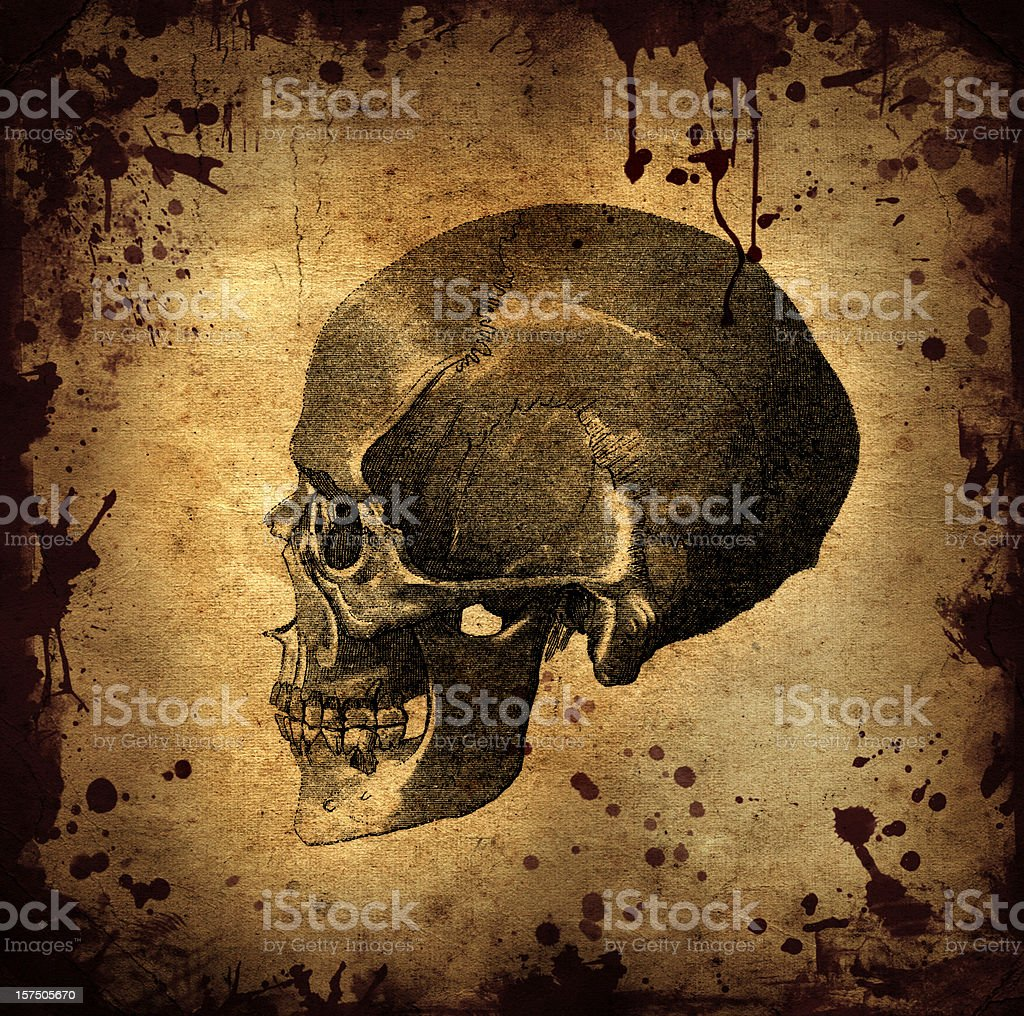 Horror Skull Halloween Background stock photo
