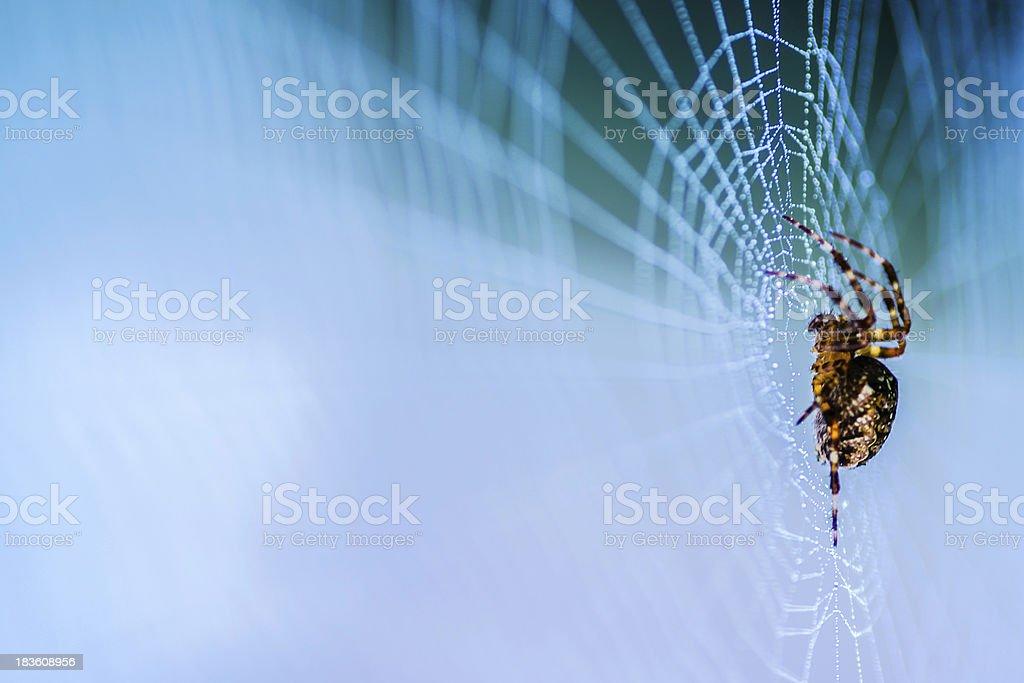 Horror Spider royalty-free stock photo