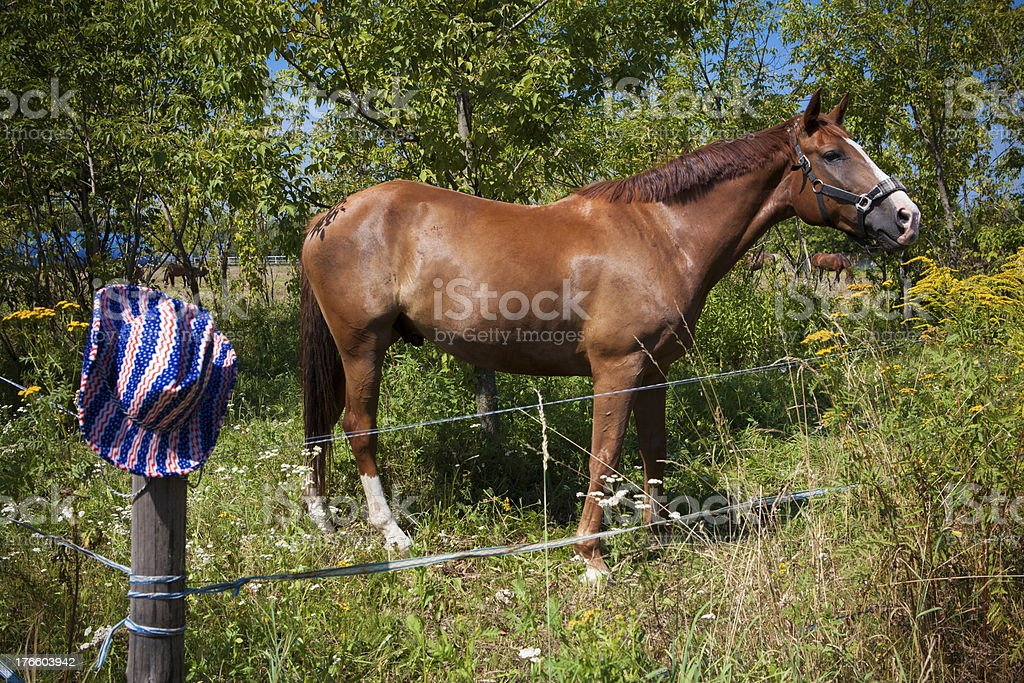 Hors and hat royalty-free stock photo