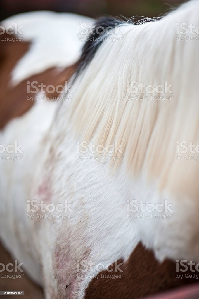 Horse Abstract stock photo