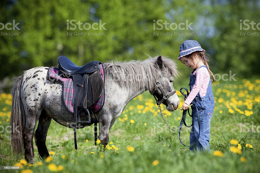 A horse and a child in a field stock photo