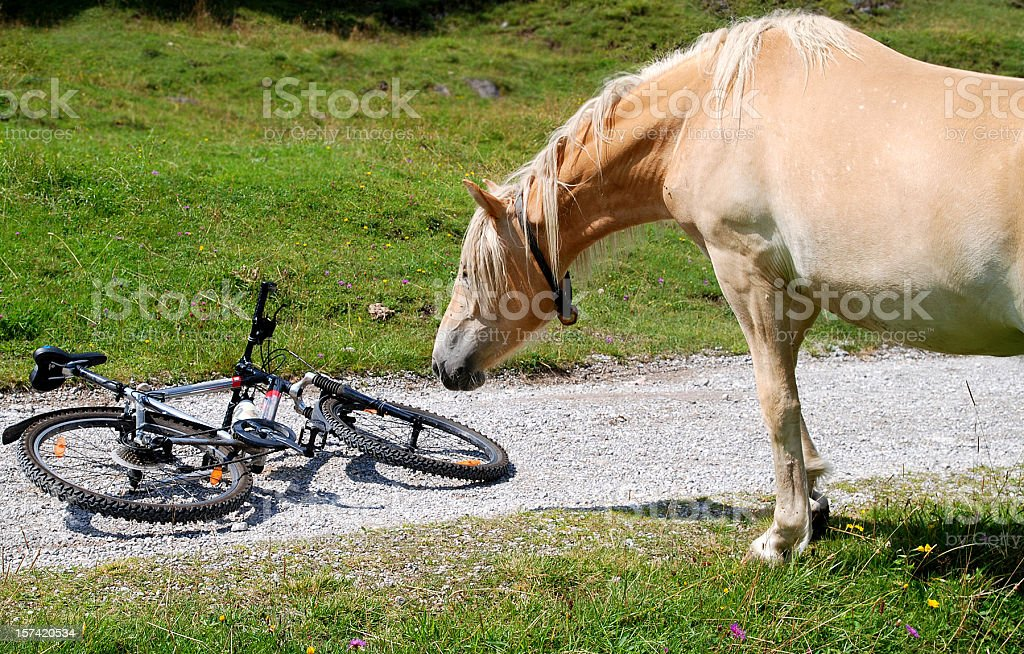 horse and bicycle stock photo