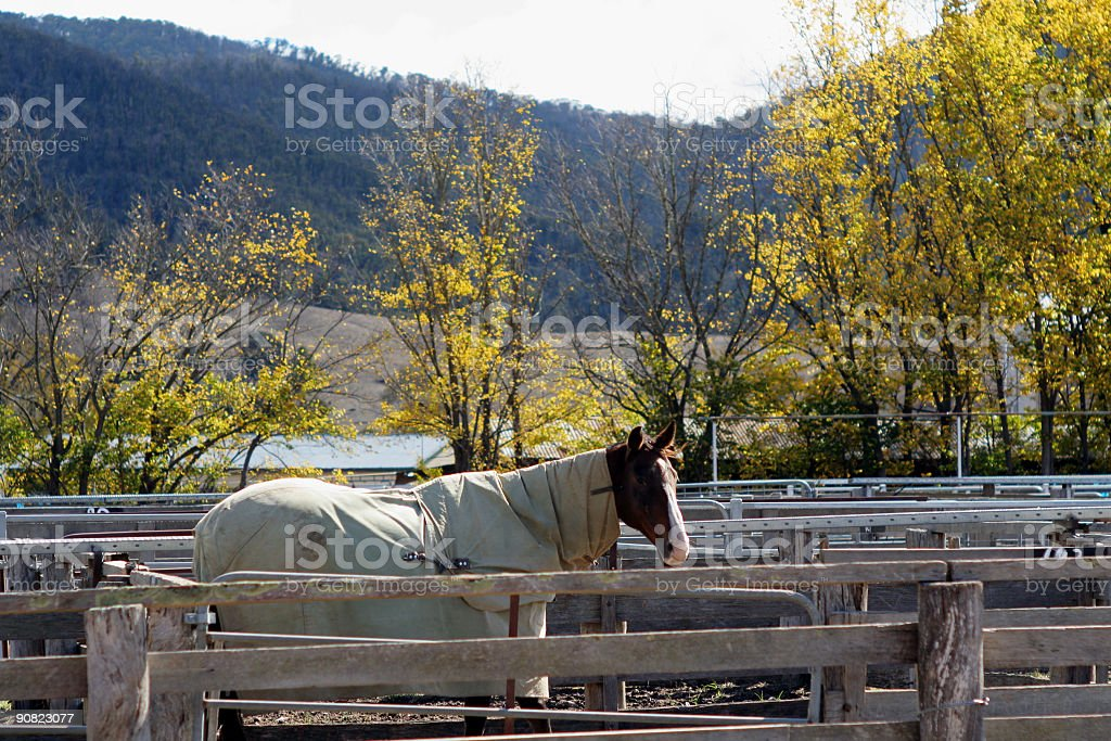 Horse and blanket, alone in a pen stock photo