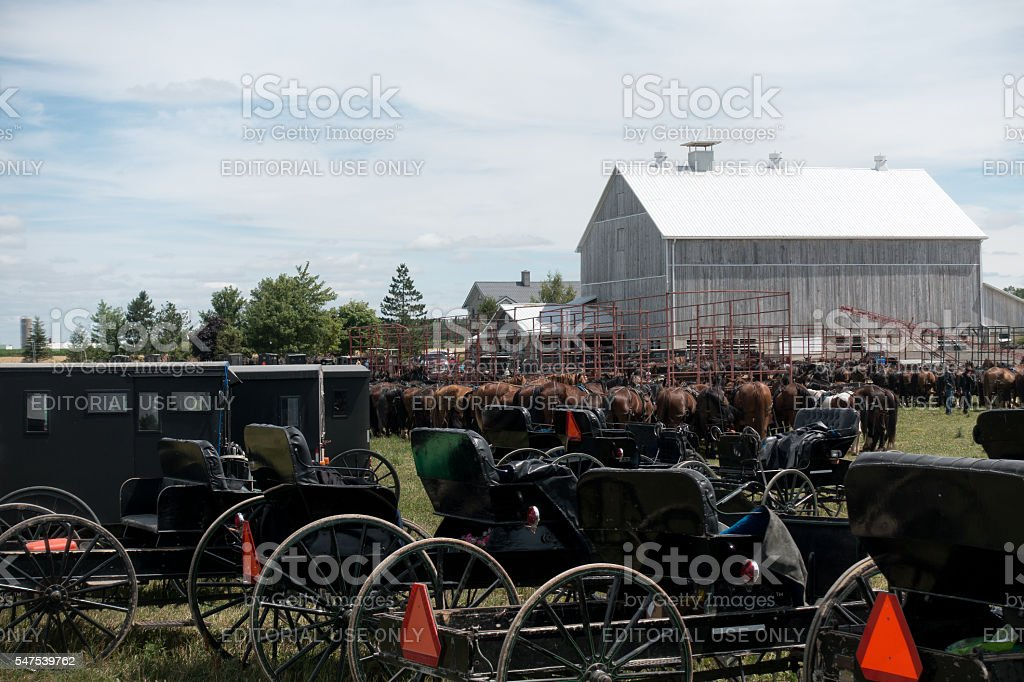 Horse and Buggy Parking at Auction stock photo