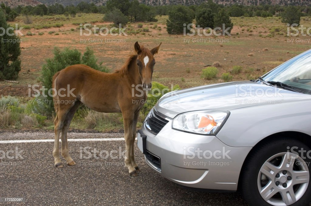 Horse and car royalty-free stock photo