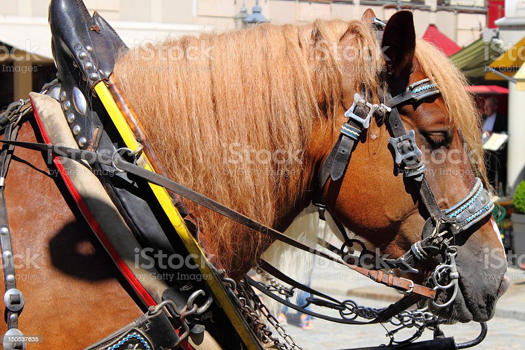 Horse and carriage stock photo