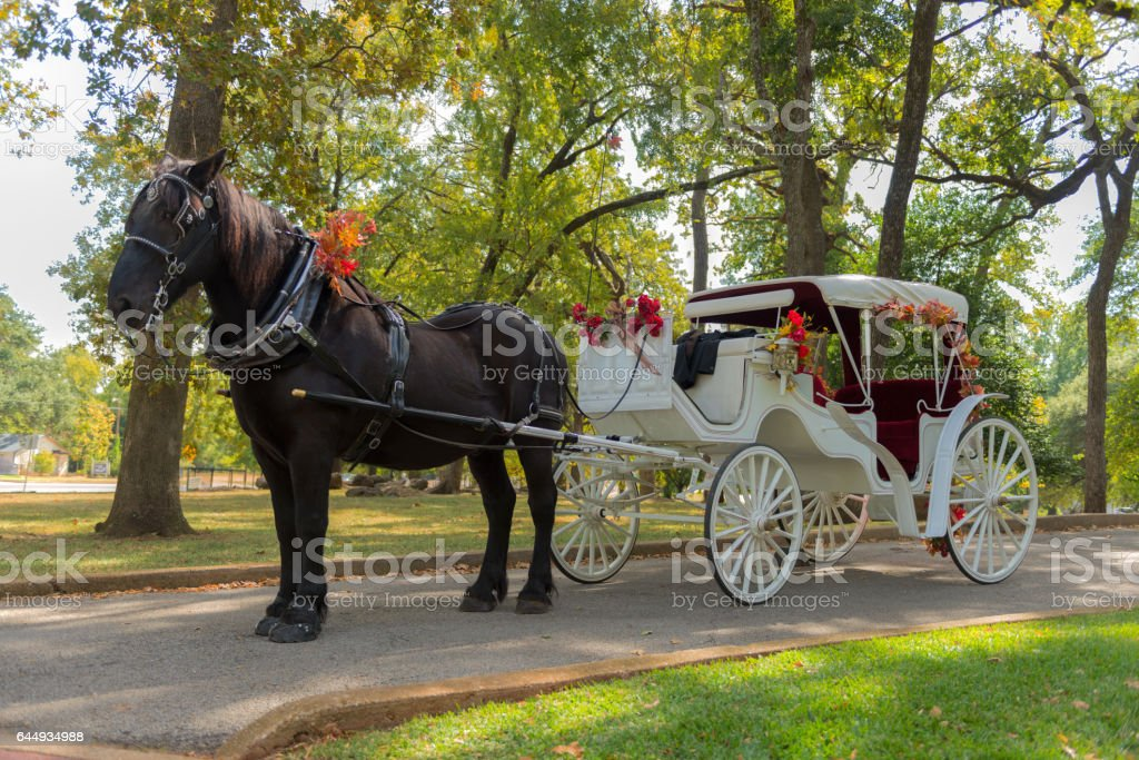 Horse and Carriage Ride in a forest stock photo