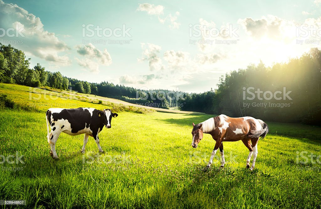 Horse and cow pasture on a glade stock photo