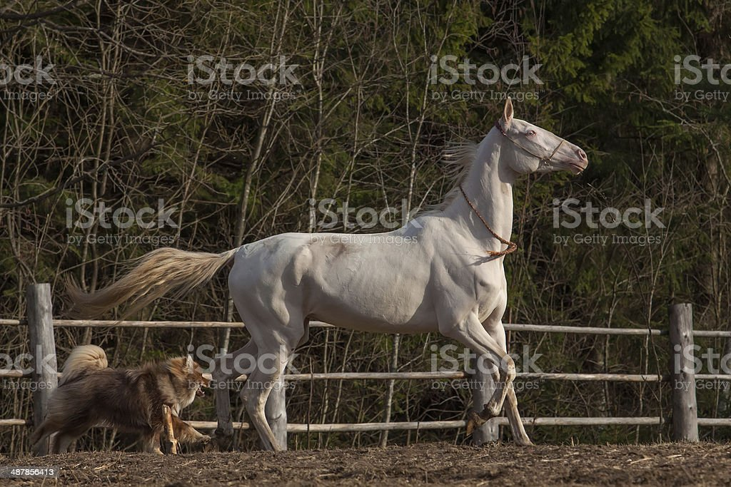 Horse and dog royalty-free stock photo