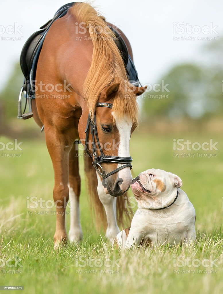 Horse and dog stock photo