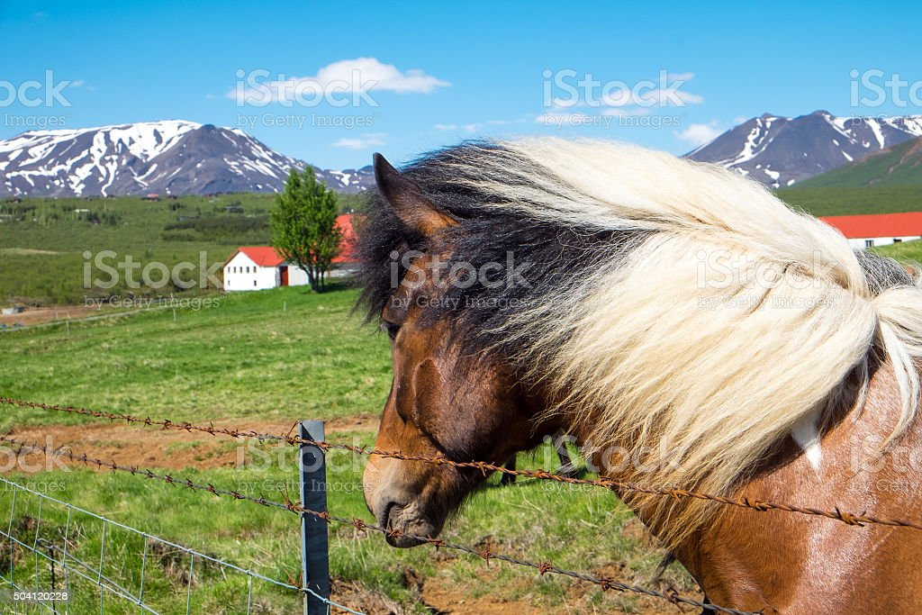 Horse and farm in Iceland stock photo