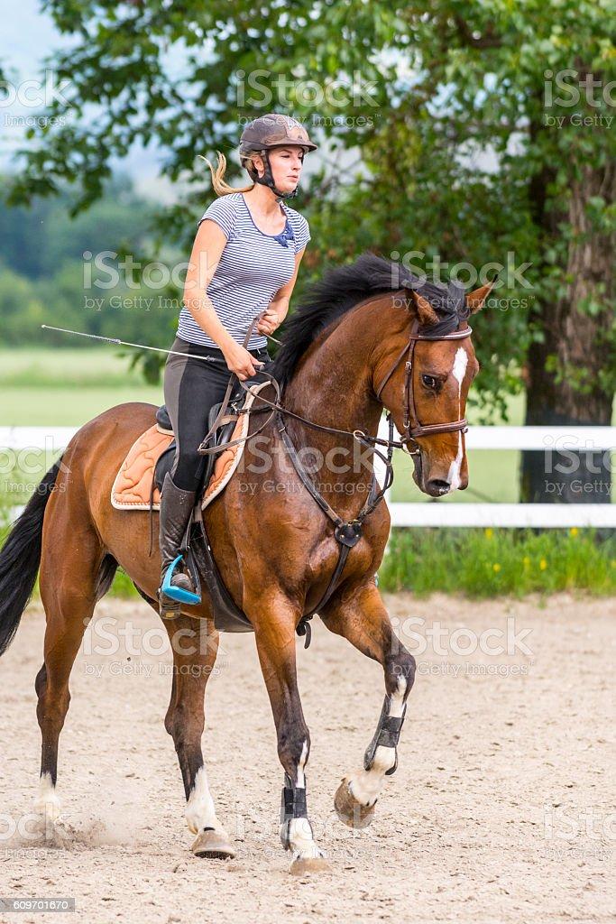 Horse and female rider on training stock photo
