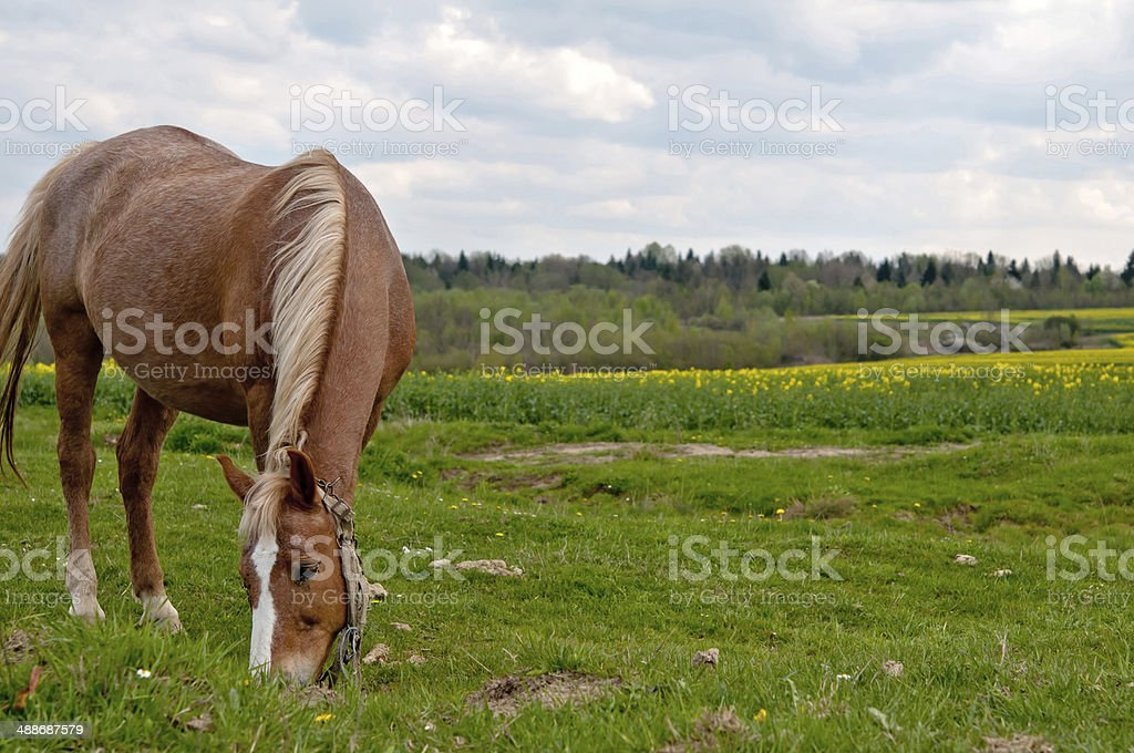 horse and field royalty-free stock photo