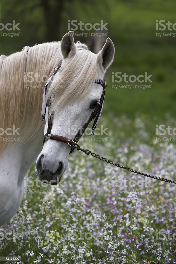Horse And Flowers royalty-free stock photo
