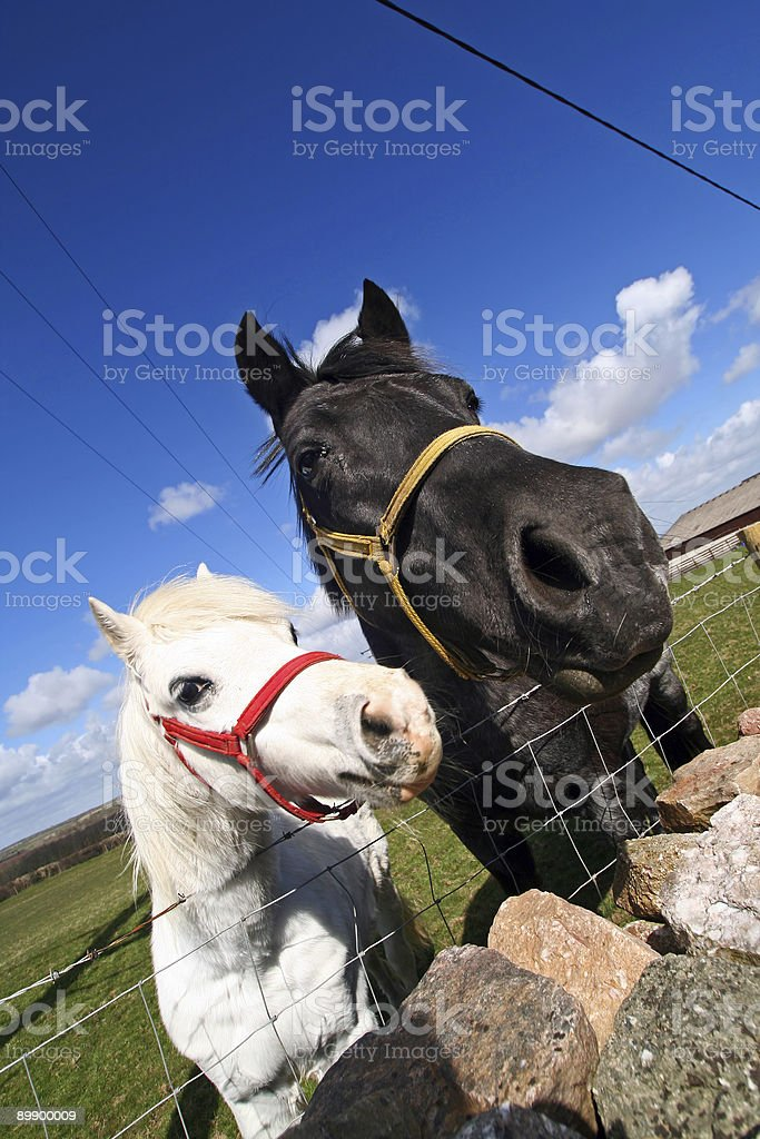 horse and foal (wide angle) stock photo