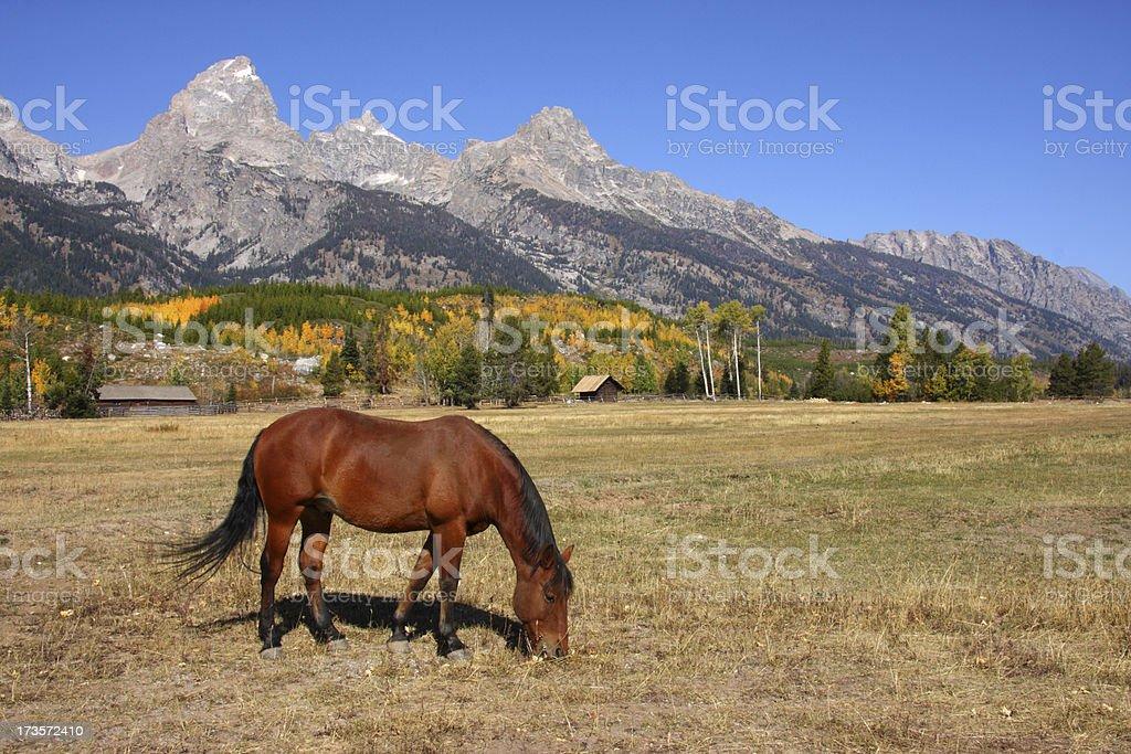 Horse and Grand Teton stock photo