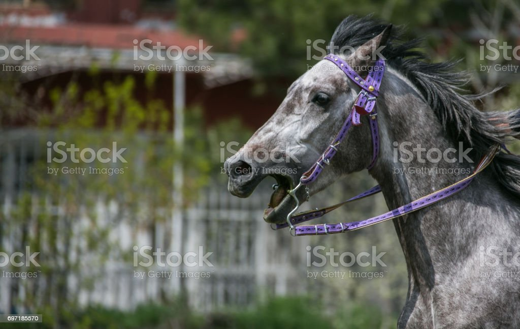 horse and groom stock photo