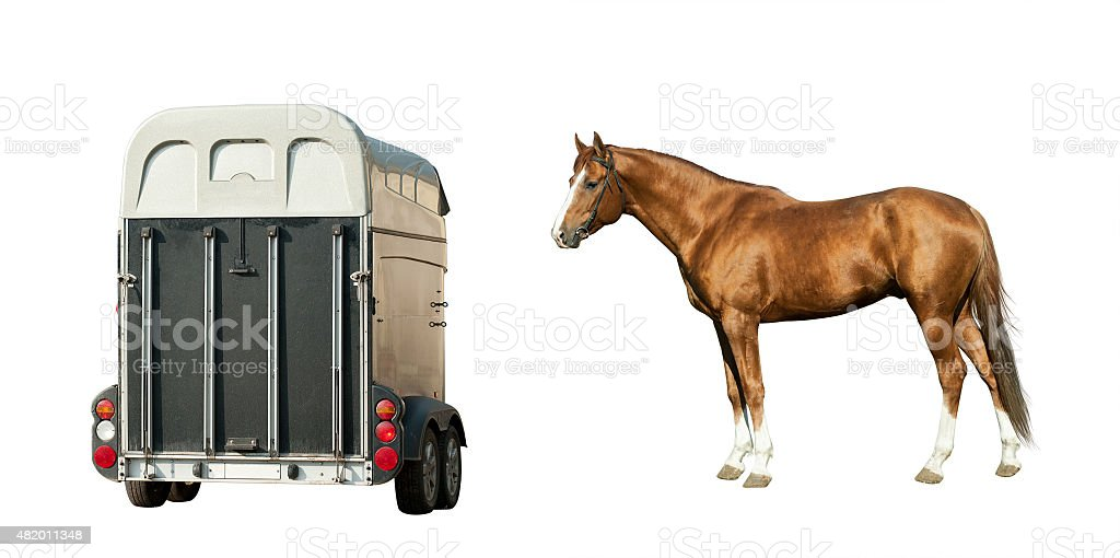 Horse and horse-transport isolated on white stock photo