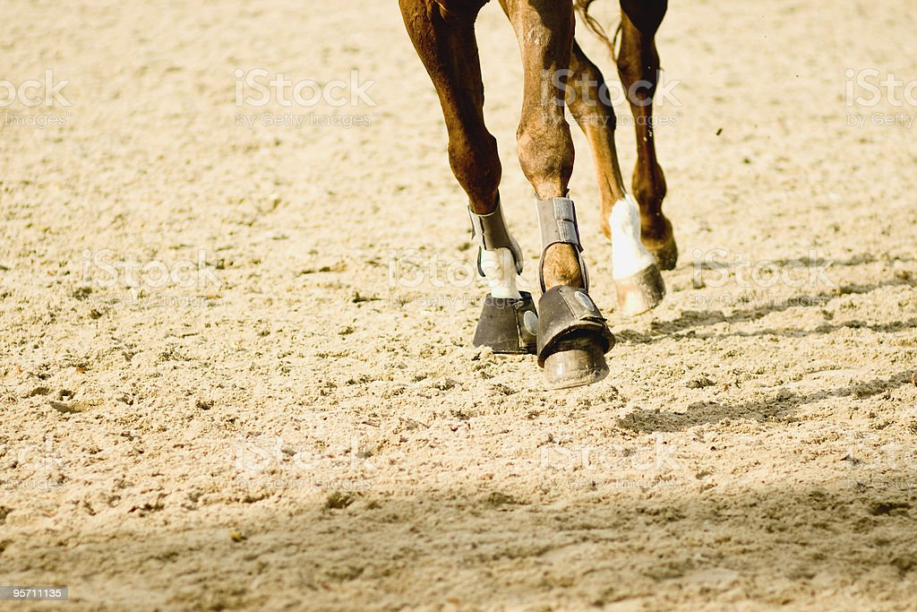 Horse and its hobbles/fetlocks at a trot stock photo