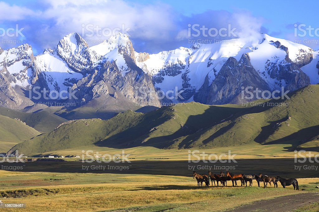 horse and mountains stock photo