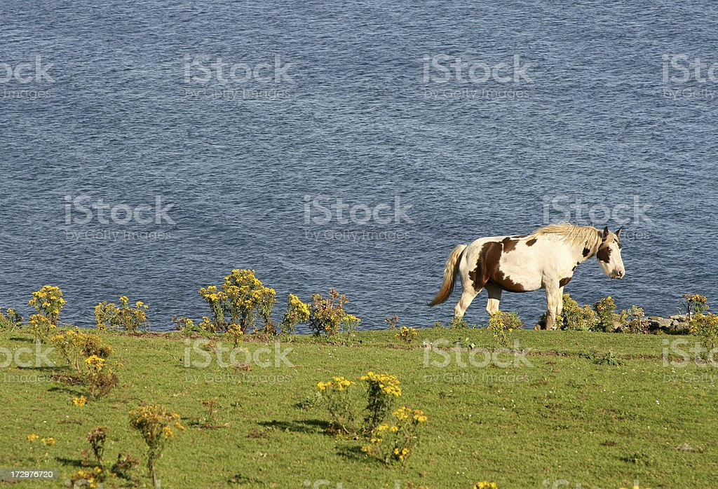 Horse and ocean stock photo