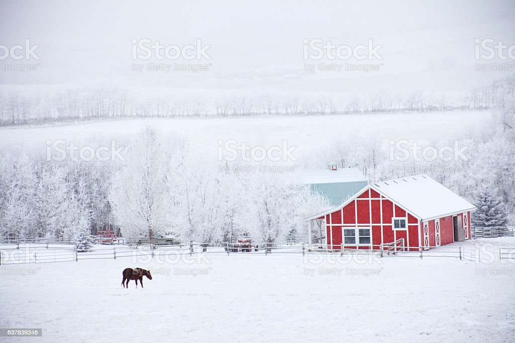 Horse and Red Barn in Winter stock photo