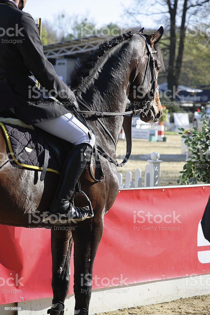 Horse and rider 1 royalty-free stock photo